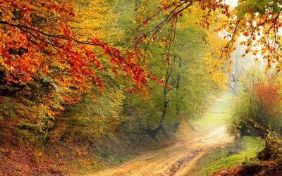 Mit Ayurveda fit durch den Herbst