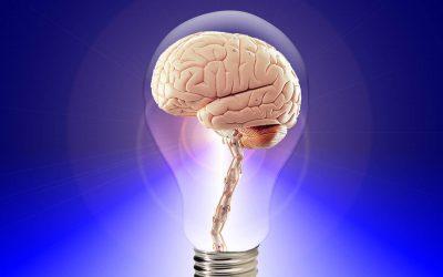 Die Blut Hirn Schranke und die Nervenkräuter