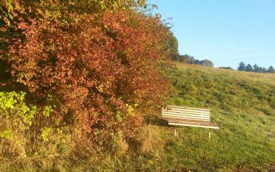 Mit Ayurveda durch den Herbst